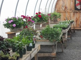 The Hemlock Greenhouse